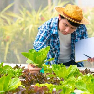 Man in Aquaponics workshop inspecting plants