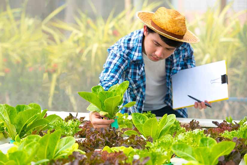 Man in Aquaponics workshop inspecting plants